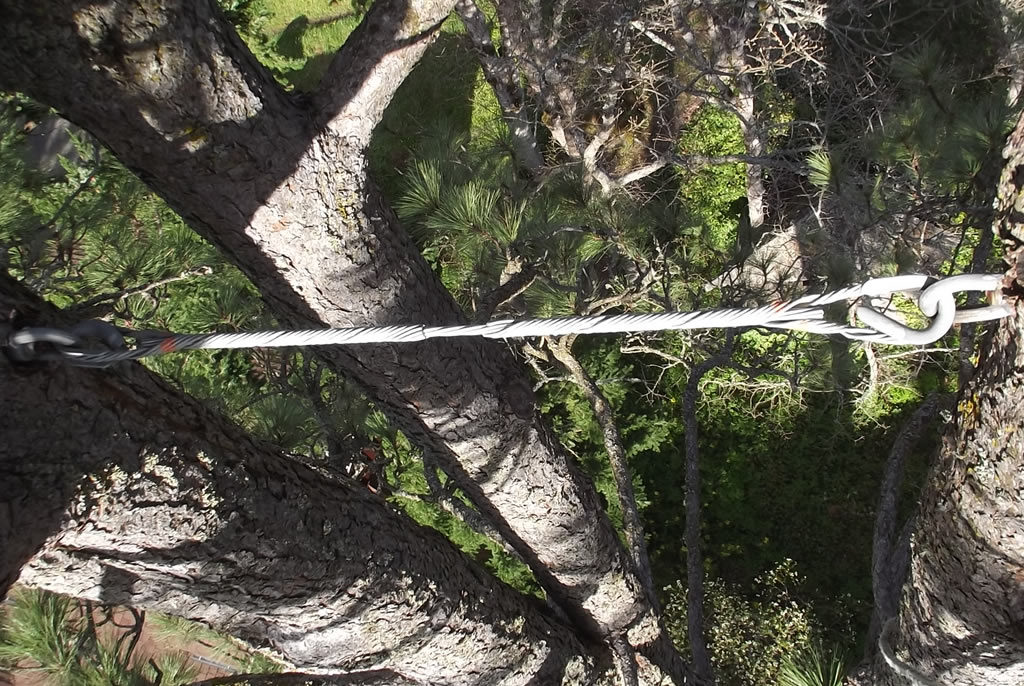 Cabling & bracing provides structural support for weak or damaged trees.