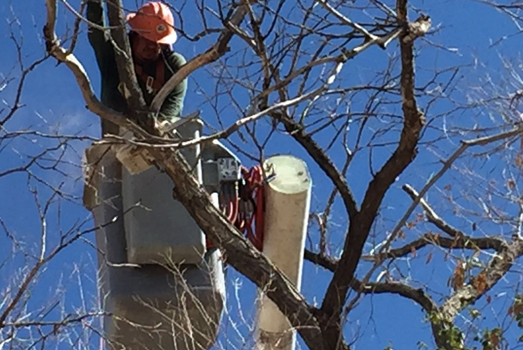 Tree Trimming by Coates Tree Service